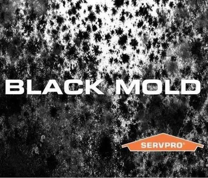 Get the facts on mold! - Image of black mold.