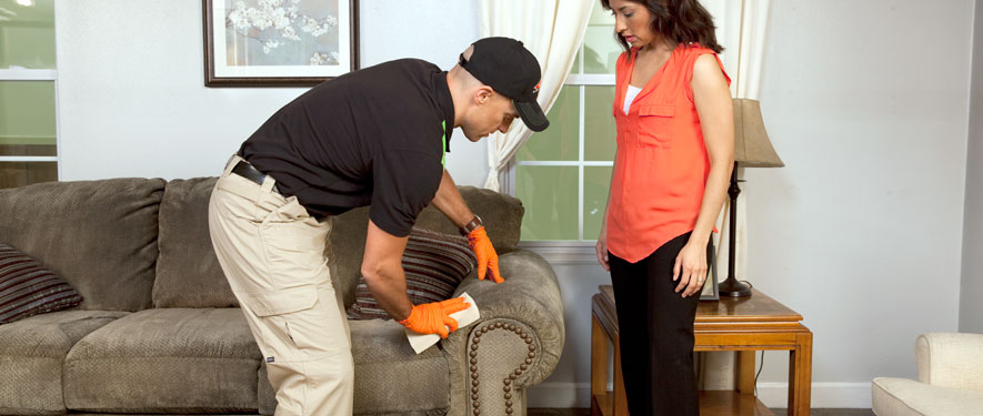 Tampa, FL carpet upholstery cleaning